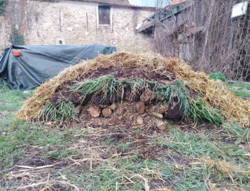 /LA MAIN VERTE/ Découvrir la permaculture